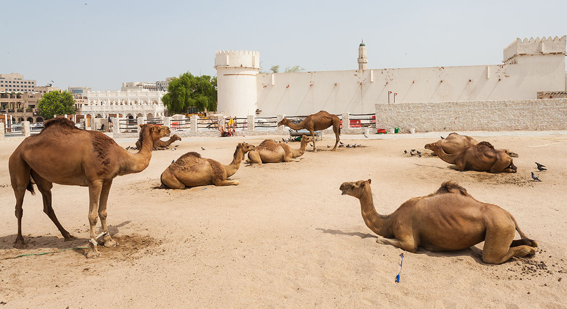 Al-Khoot Fort (Qatar Attractions)