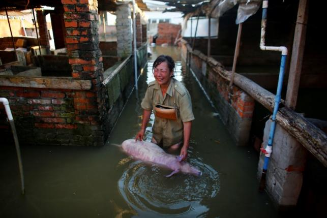 A woman cries as she holds body of a dead pig at a flooded farm in Xiaogan, Hubei Province, China, July 22, 2016. REUTERS/Darley Shen